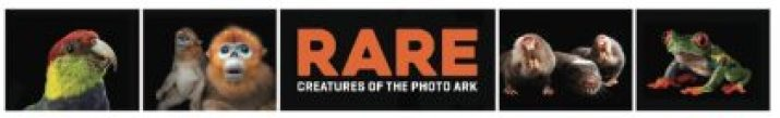 PBS' RARE: Creatures of the Photo Ark profiles renowned National Geographic photographer, author and conservationist Joel Sartore as he documents threatened species at zoos, in nature preserves and more for his long-running