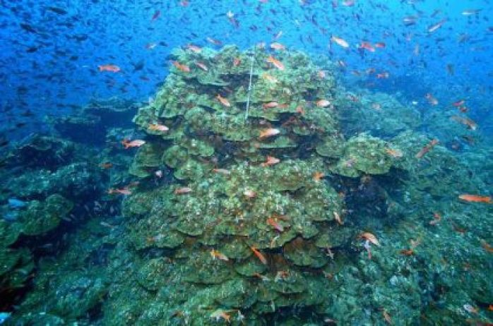 First Evidence of Ocean Warming Around Galápagos Corals