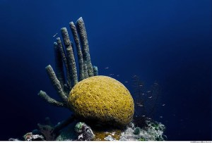 Belize Tourism Board Launches Sister Reef Project to Benefit World Wildlife Fund