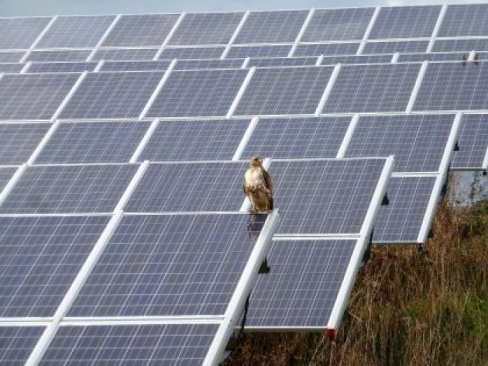 Wolverine to Add Largest Solar Array in Northern Michigan  Wolverine Power