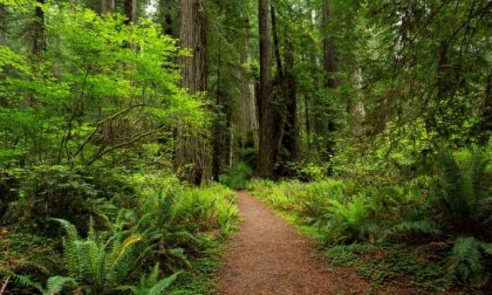 Forward Together – A Ground-Level Take on the Northern California Fire Recovery