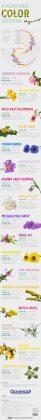 Organic green flowering guide