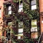 Eco Brooklyn Living Walls front