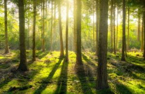 Reforestation can help solve the climate crisis