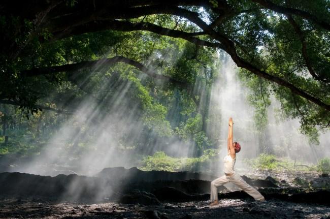 yoga forest mindfulness
