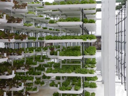 vertical hydroponic gardening