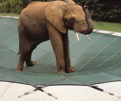 elephant pool cover