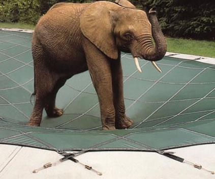 elephant pool cover