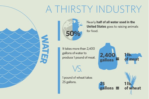 water use meat-graphic
