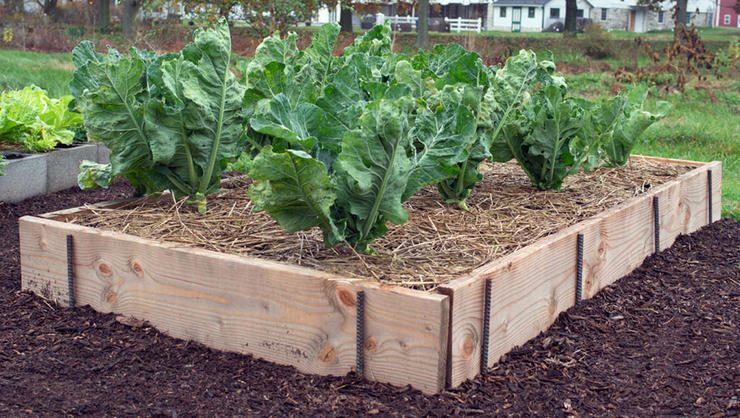Ready Made Raised Bed Garden Kits For Organic Gardeners Green Living Ideas