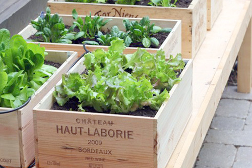 wine-box-container-garden