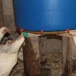 Chicken Mega-Waterer v1.2
