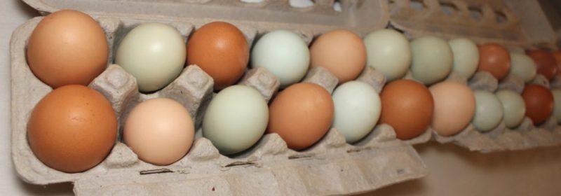 eggbanner