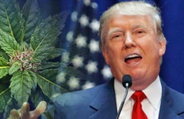 Trump says he is likely to support ending federal ban on marijuana