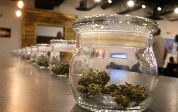 Cannabis in jars on counter