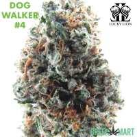 Lucky Lion - Dogwalker #4