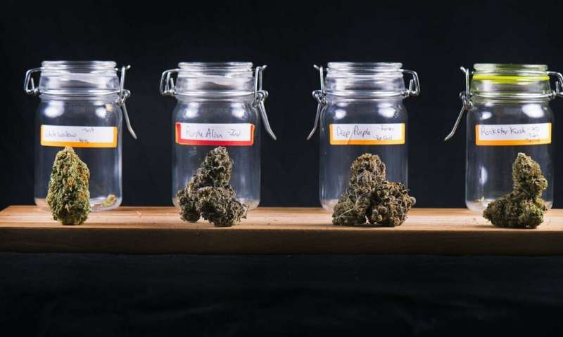 Marijuana is a lot more than just THC—a pharmacologist looks at the untapped healing compounds