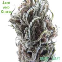 Jack and Cheese Flower