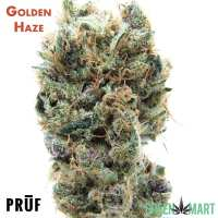 Golden Haze by Pruf Cultivars