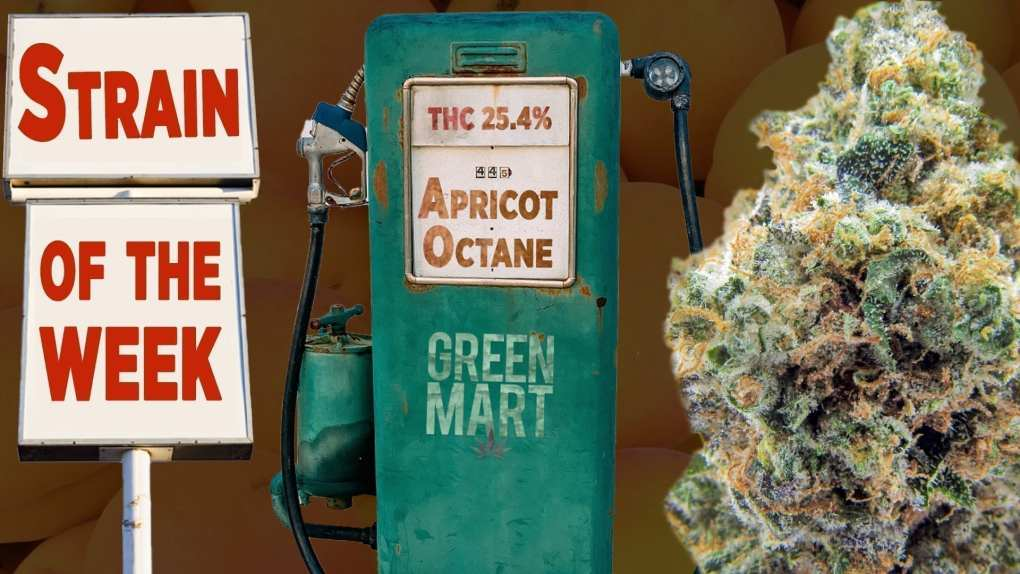 Apricot Octane is the Green Mart Strain of the Week