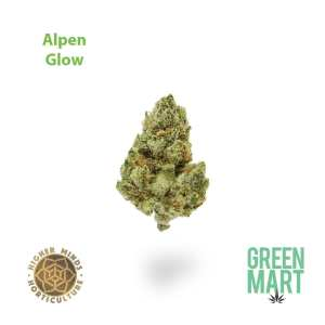Higher Minds Horticulture Alpen Glow Flower