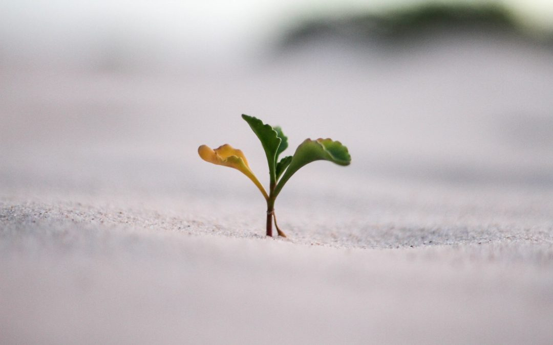closeup photography of plant on ground