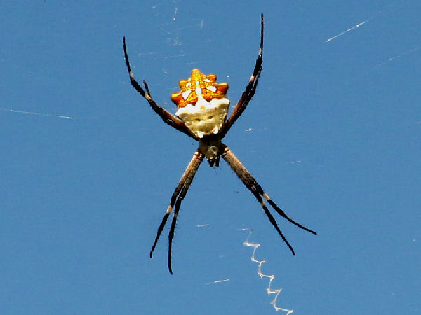 Types Of Spiders Pictures And Spider Identification Help Green Nature