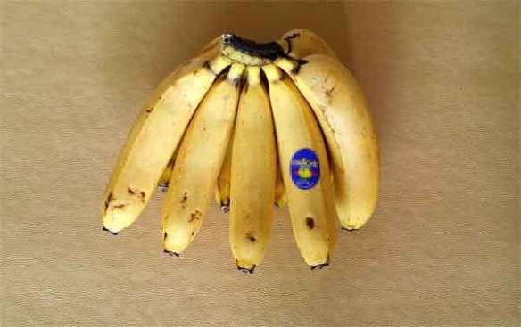 바나나 열대과일 식품