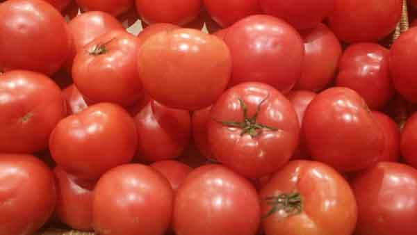 토마토-토마토 효능-토마토 성분