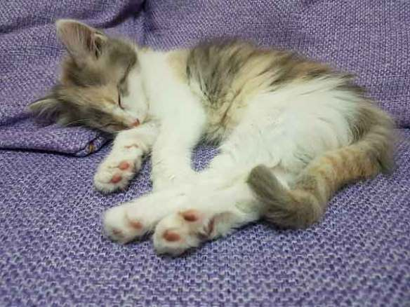 잠-수면-불면증-수면시간
