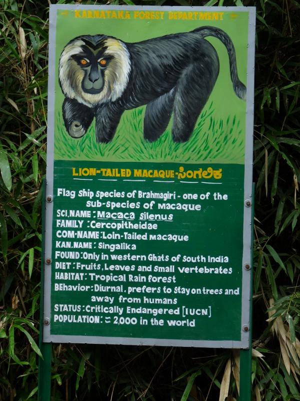 A homecoming to Iruppu Falls-The Green Ogre