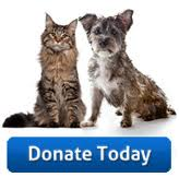 Donate Cat dog button