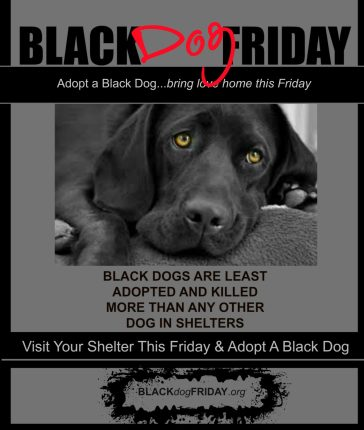 Adopt a Black Dog This BLACK FRIDAY
