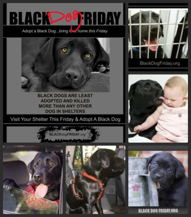 Free Black Dog Friday Adoption Poster
