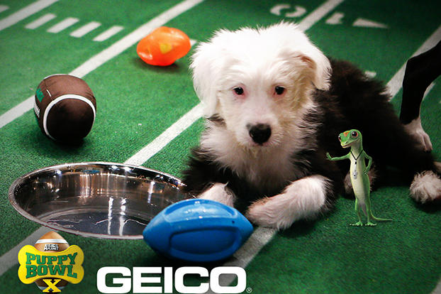 Count down to PUPPY BOWL