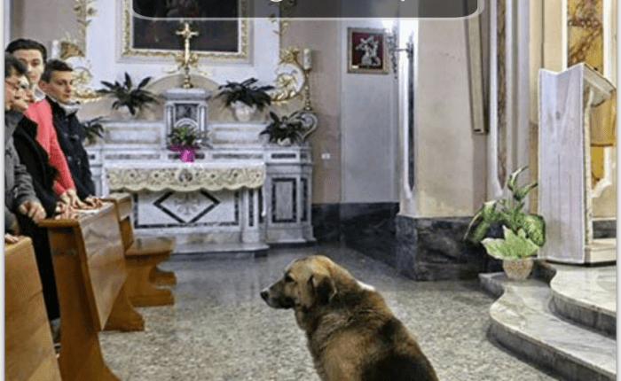 dogs prayer