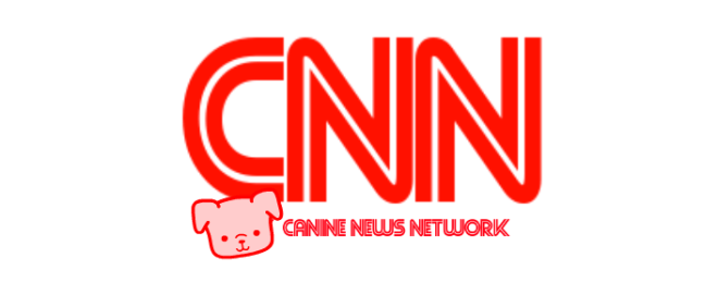 CNN - Canine News Network