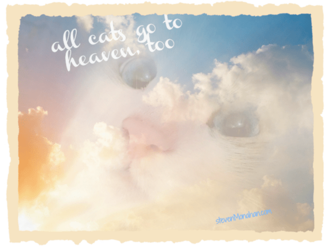 Do cats go to heaven