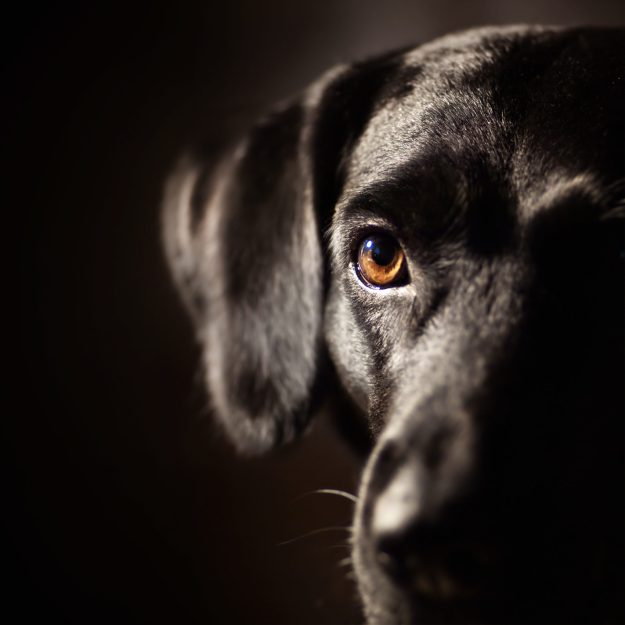 The Most Killed Dogs Black Dog Syndrome