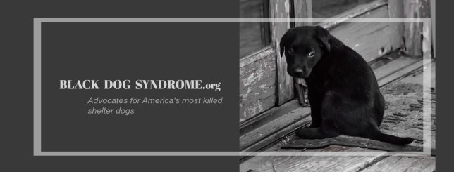 Black Dog Syndrome Video
