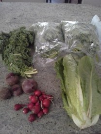 I got all this for $15. The romaine was almost 2lbs