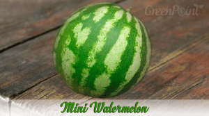 Mini Watermelon.