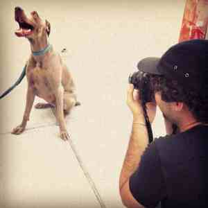 dog portrait nicolas maloof