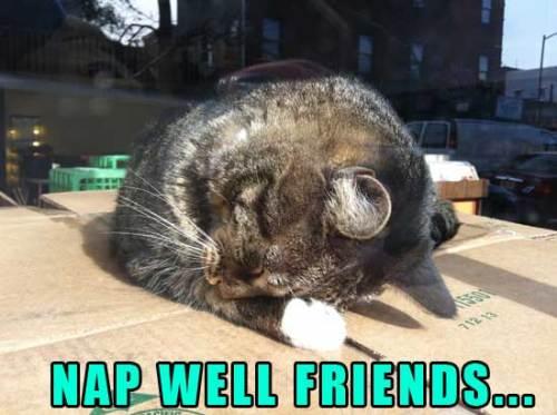cute cat nap