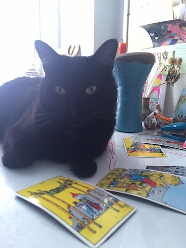 Of Cats and Cards... Photo Courtesy of Eva Jane Peck