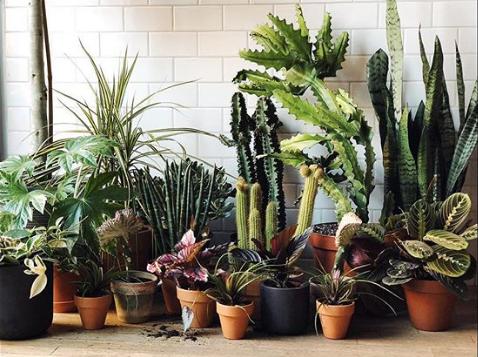 Totes adorbs plants at Homecoming. Image via Instagram