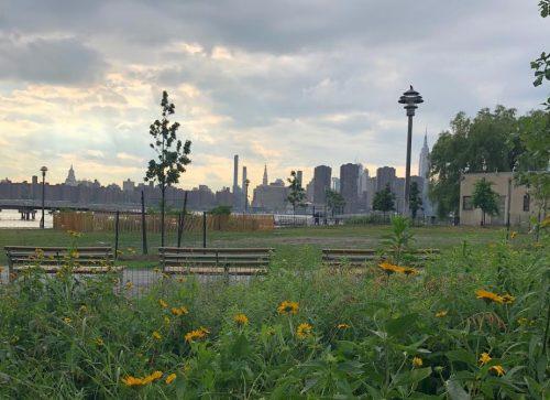 Wildflowers in Transmitter Park. Photo: Megan Penmann