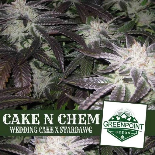 Cake N Chem Cannabis Seeds   Wedding Cake Strain   Greenpoint Seeds Cake N Chem  Wedding Cake x Star Dawg    Greenpoint Seeds