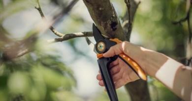 Wiosenne cięcie w ogrodzie – jaki sekator wybrać?
