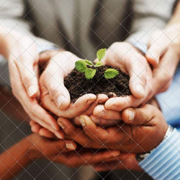 photodune-202935-business-growth-hands-holding-green-plant-indicating-teamwork-m